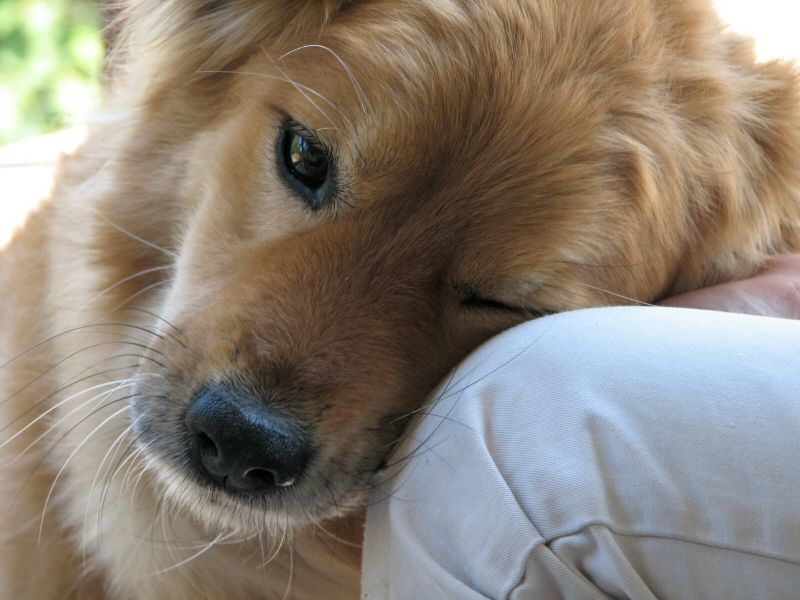 New sensor, designed to mimic the superior sense of smell that a dog possesses, has been developed