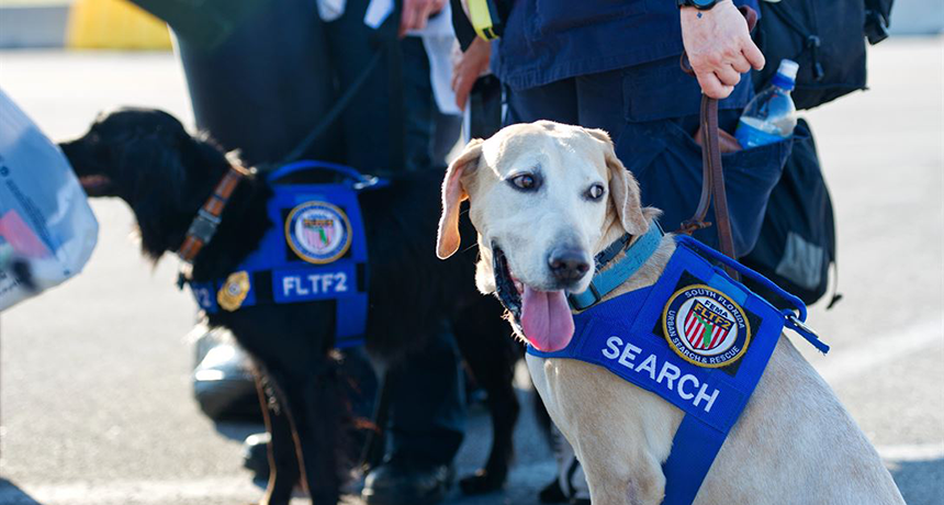 Electronic noses might replace search-and-rescue dogs | Science News for Kids