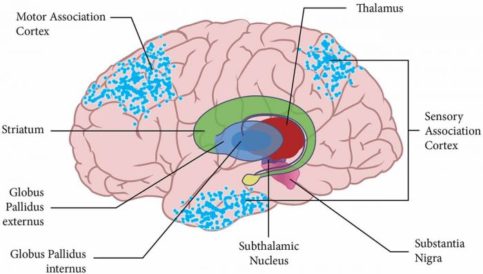 A central hub to relay sensory information to the brain | Science Trends