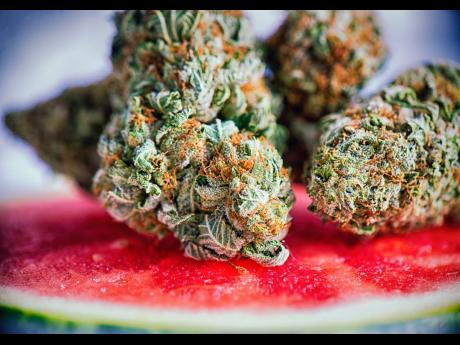 Weed Ed | The trend towards exotic ganja flavours | Jamaica Gleaner