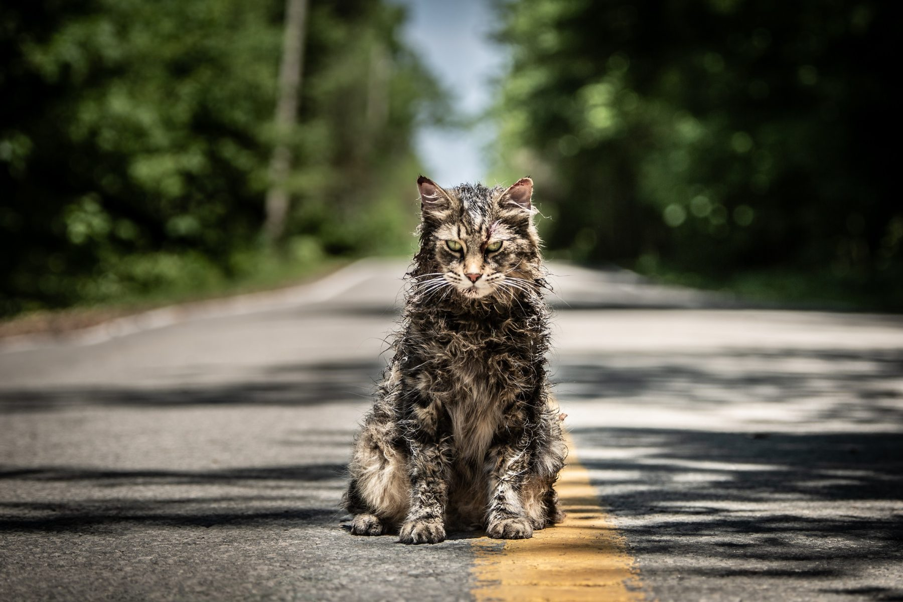 Pet Sematary' in 4DX Theaters: Motion-synchronized seats, wind, fog, rain, lightning, snow, bubbles, vibrations, and scents | Bloody Disgusting