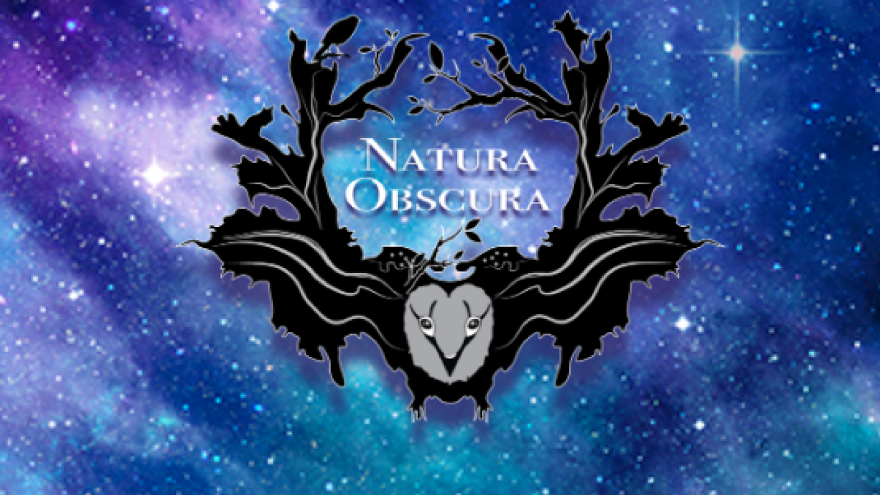 Multisensory Natura Obscura exhibit to stay open through summer |The Denver Channel