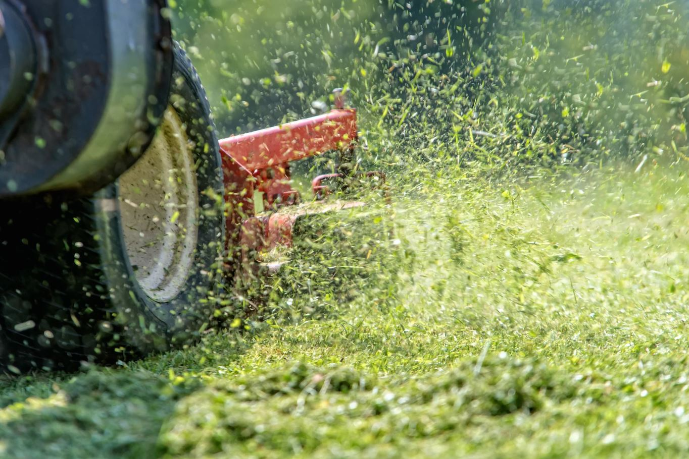 Why Does Freshly Cut Grass Smell So Nice? |  Live Science