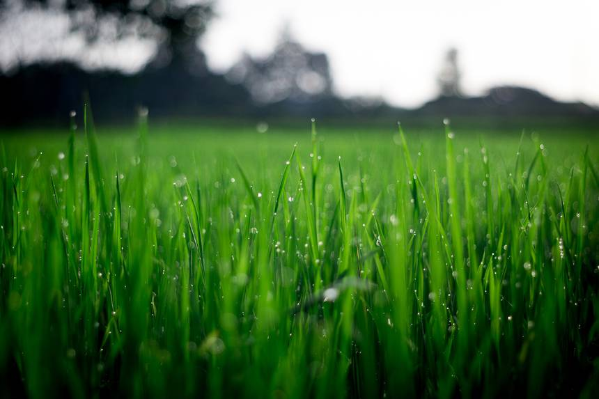 What fresh cut grass is saying with its scent | TreeHugger