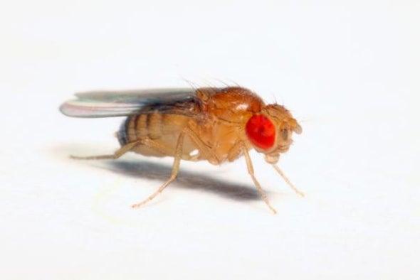 "Scientists Fool Flies with ""Virtual Tastes"" | Scientific American"