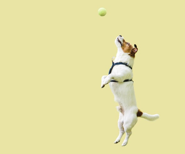Dogs Like Motion That Matches Sound | Scientific American