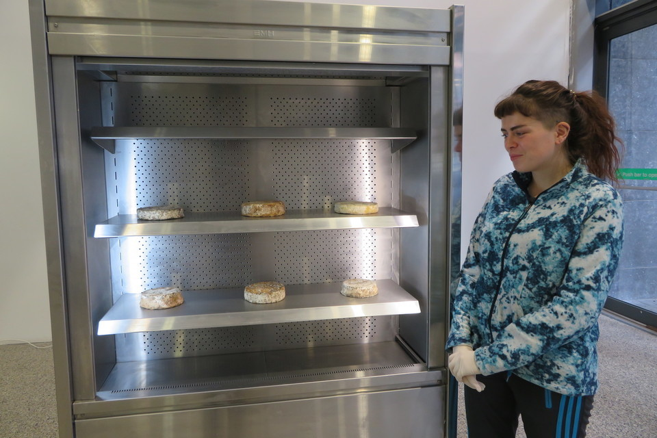 Black-Mould Brie, Anyone? An Art Project Comes to the City | Dublin Inquirer