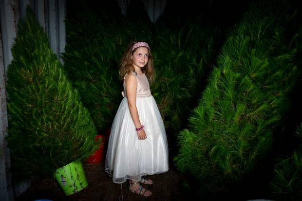Megan Purcell (7) weighs up her options as she picks out a tree for Christmas. Photo / Dean Purcell
