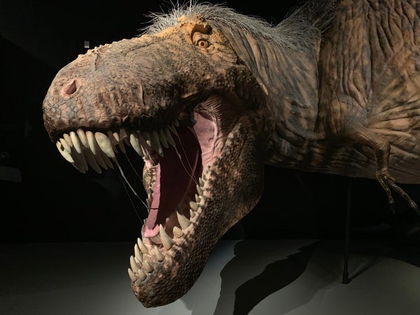 What Did Dinosaurs Smell Like? | Scientific American