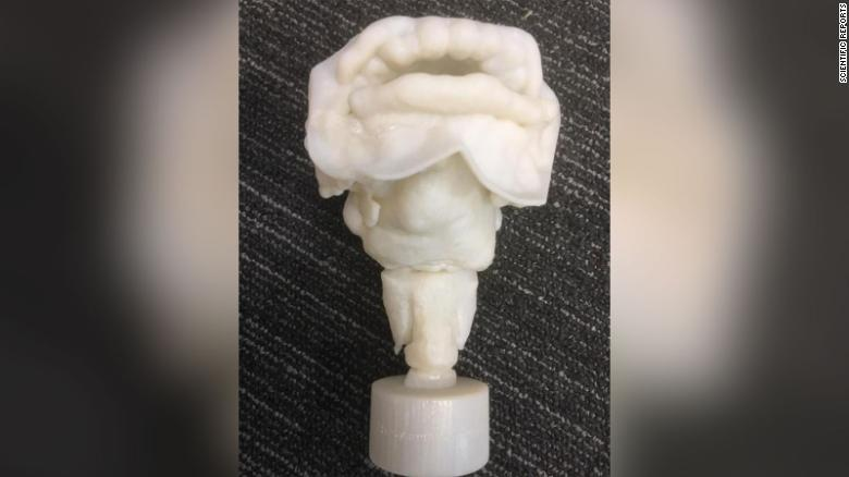 3-D printed vocal tract of Nesyamun
