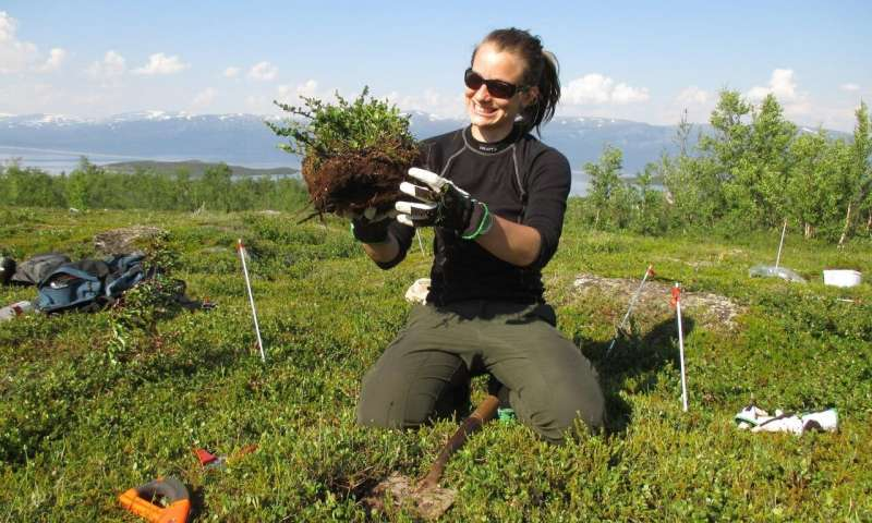 Tracking the scent of warming tundra | Phys.org