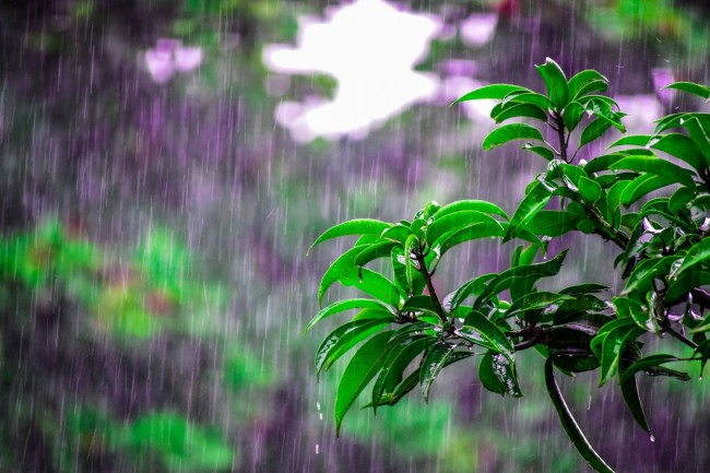 The Evolution of Rain's Distinct Scent and Its Role in Bacterial Propagation : Environment | Nature World News