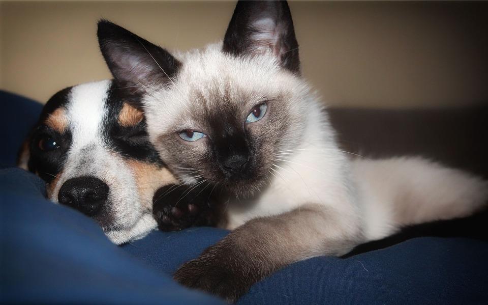 Key to harmonious pet relationships: Pheromones | ScienceDaily
