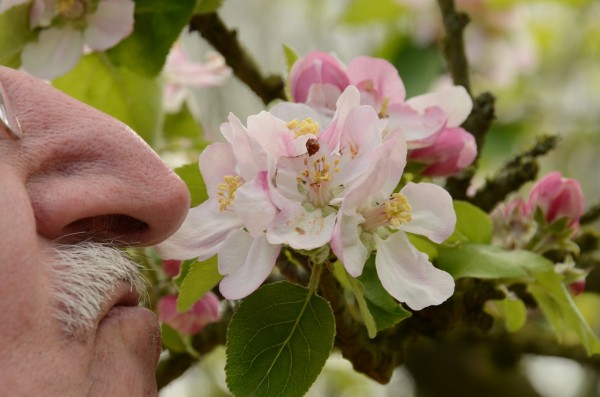 Elderly Who Retain Sense of Smell Are at Lower Risk of Dementia   Science Times