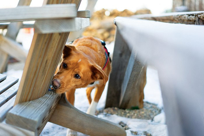 Smelly science: Scent training your dog and the sweet smell of fresh laundry | CEN.ACS