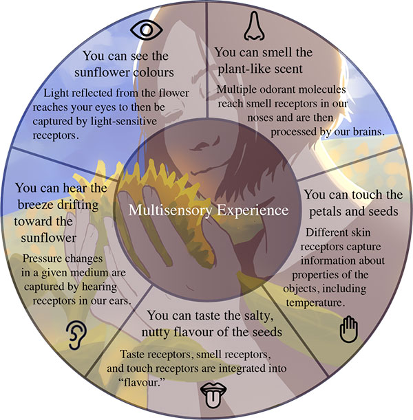 multisensory experiences of a sunflower