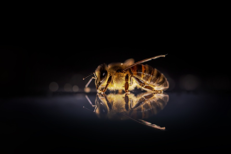 Scientists 'scent train' honeybees to boost sunflowers' seed production | ScienceDaily