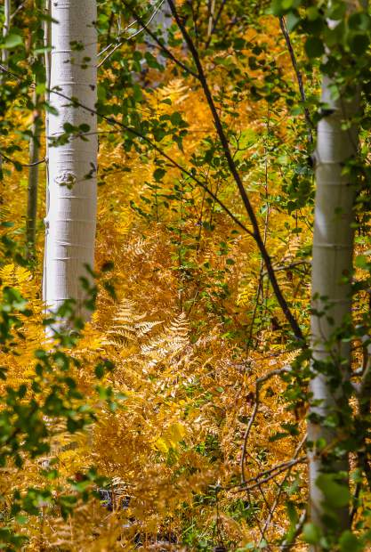 Curious Nature: Have you smelled it? Fall is in the air | VailDaily.com