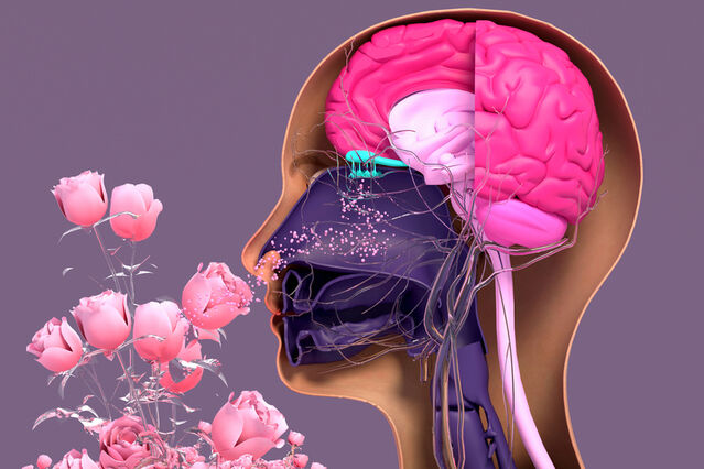 Why Smells and Memories Are So Strongly Linked in Our Brains | Psychology Today