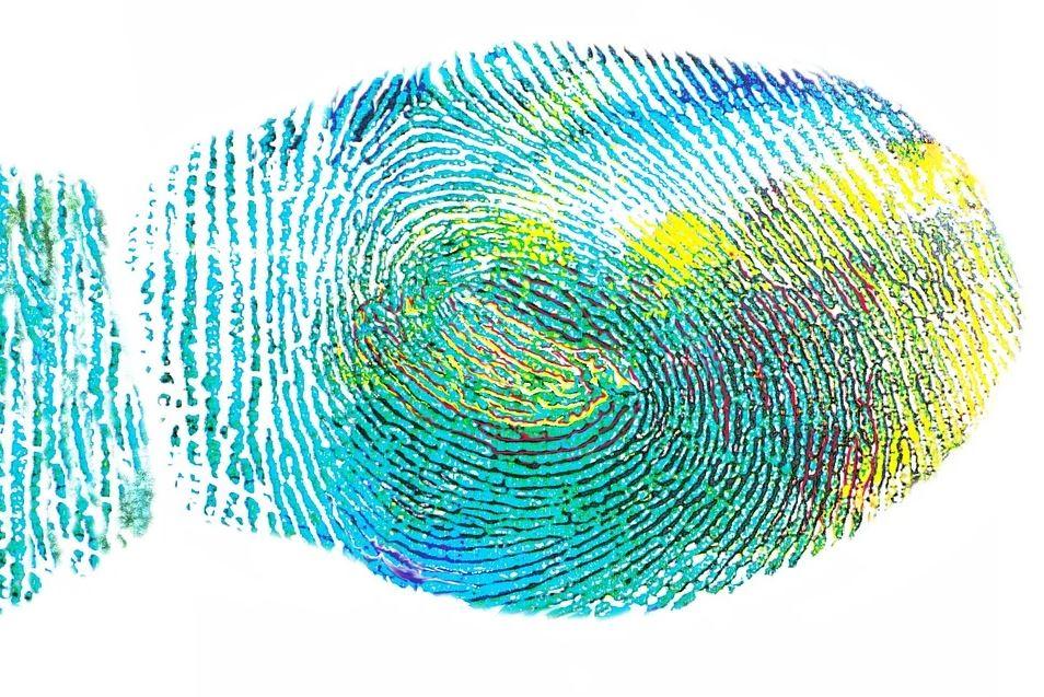 How do fingerprints enhance our sense of touch? | News-medical.net