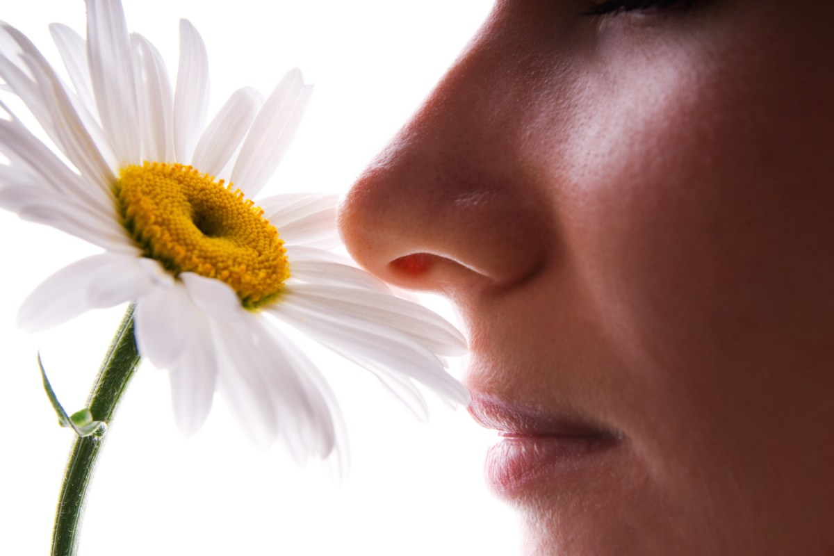 Study reveals why smell memories are stronger than other sense memories | New Atlas