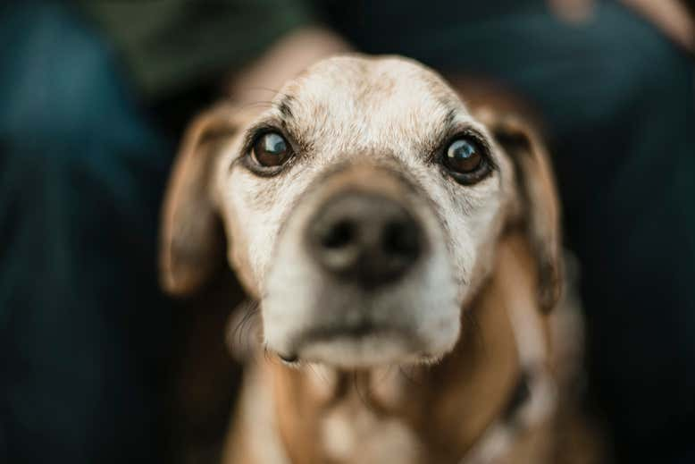 Dogs that detect seizures may be sniffing out the scent of human fear | New Scientist