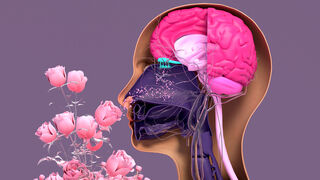 How Memories of Smell Are Planted in the Brain | Psychology Today Canada