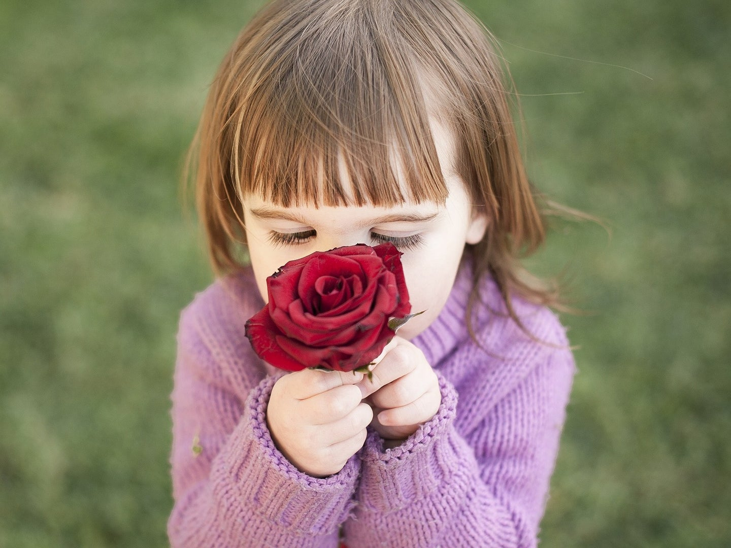 We have now seen our sense of smell in action   Popular Science