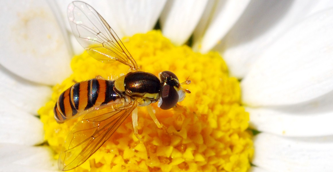 Plants and pollinators use electric fields to find each other | Natural History Museum