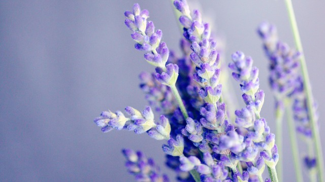 Making Sense of Scents: Emotional Brain Areas Process Smell | Technology Networks